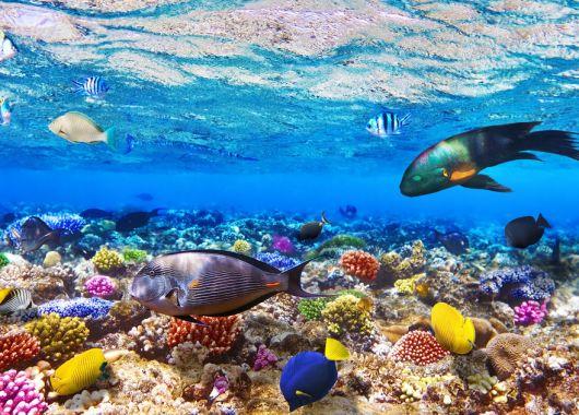 1 Woche Hurghada Ende Januar: 4* Sea World mit All Inclusive, Flug, Rail&Fly und Transfer ab 225€