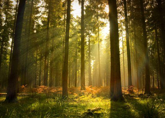 Kurztrip in den Harz: 3 Tage inklusive Wellness und Frühstück für nur 45 Euro pro Person