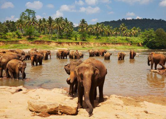 9 Tage Sri Lanka im 3,5* Strandresort mit All Inclusive, Flug und Transfer ab 808€