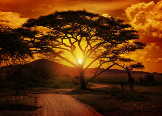 Faszination Südafrika – günstige Hin- und Rückflüge nach Johannesburg ab 456€