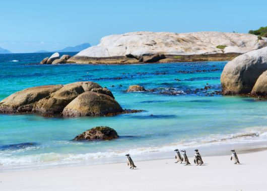 Kapstadt im Winter: 9 Tage im 4* Hotel inkl. Flug ab 590€ pro Person