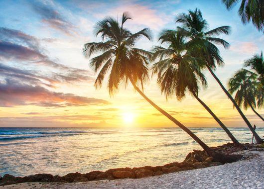 Wild am Mittwoch: Hin- und Rückflug nach Guadeloupe (Karibik) und Bonaire (ABC-Inseln) für nur 449€ und 499€