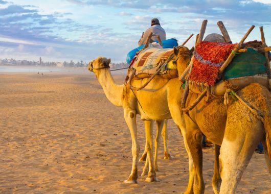 2 Woche Agadir im April: 3* Apartment, Flug und Transfer ab 235€