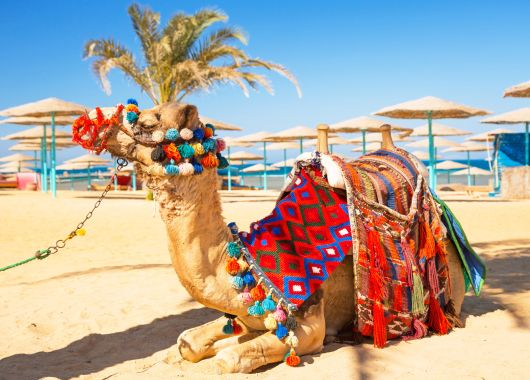 Lastminute: 1 Woche Marsa Alam im 4,5* Resort mit All Inclusive, Flug & Transfer ab 262€