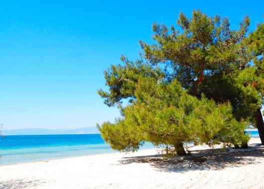 Chalkidiki: 1 Woche im 4* Hotel inkl. Flug, Transfer und Halbpension ab 255€