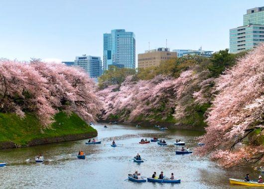 Zur Kirschblüte nach Japan: Mit Turkish Airlines ab 460€ von deutschen Airports nach Tokio oder Osaka