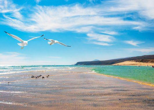 Fuerteventura: 1 Woche inkl. Flug, Transfer, Rail & Fly und Hotel ab 306€ pro Person