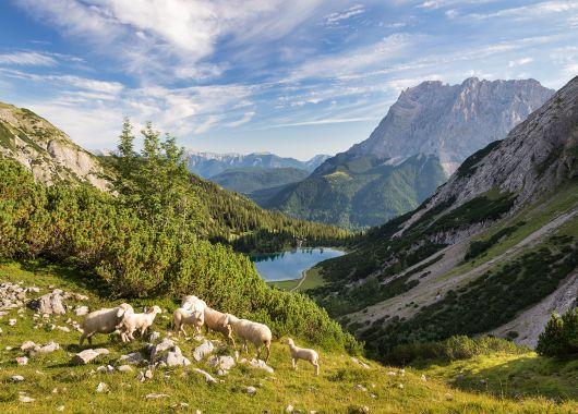 Südtirol: 3 Tage im tollen 4*S Aparthotel mit Frühstück, Welcome Drink und Almcard ab 149€