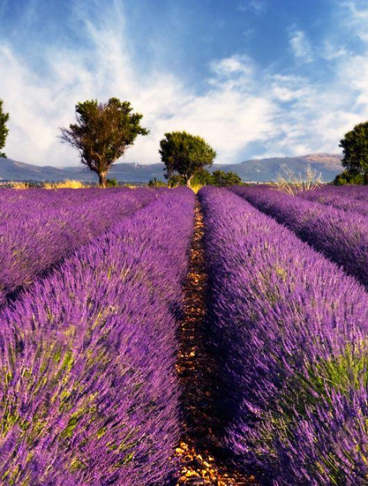 Reisebericht Provence – Eine einzigartige und traumhafte Region
