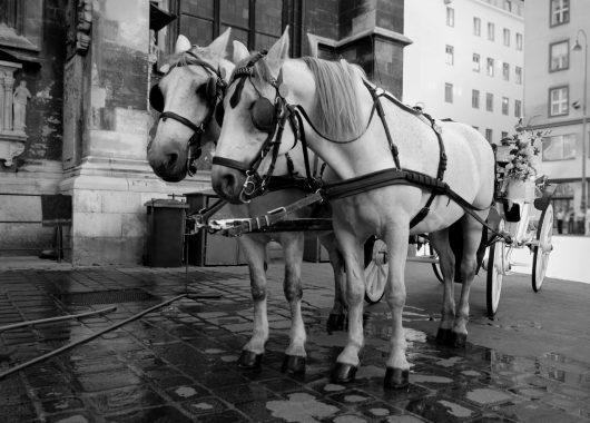 Wien: 4 Tage im 3* Hotel inkl. Flug und Frühstück ab bereits 99€ pro Person