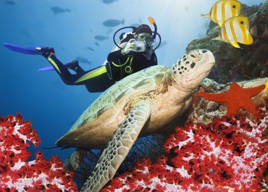 Ab-in-den-Urlaub.de: 14 Tage Ägypten im 5-Sterne-Hotel ab 261 Euro pro Person