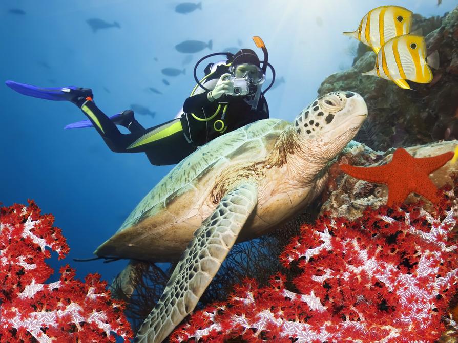 underwater tauchen ägypten