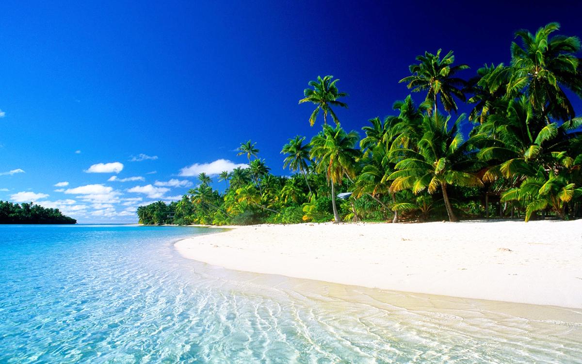 karibik tahiti barbados strand palmen