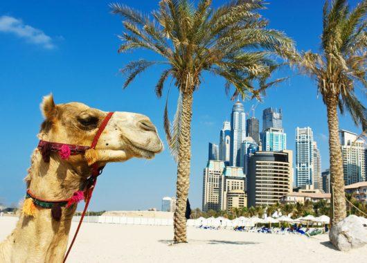 Dubai im April: 1 Woche im 5* Luxus Hotel inkl. Flug, Transfer und Frühstück ab 496€