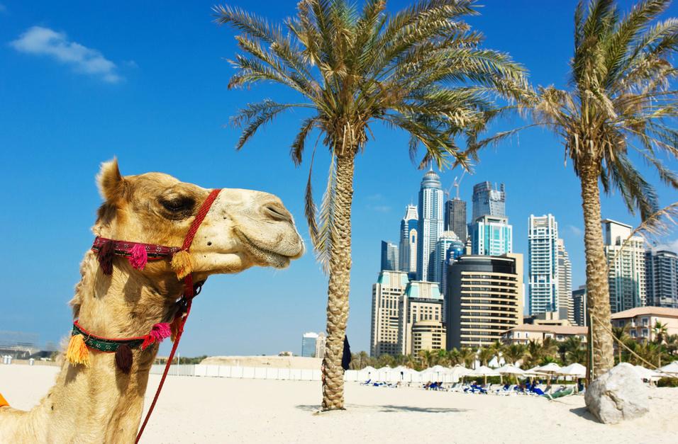 Dubai Kamel Emirate Arabische Palme Strand Ras als Khaimah