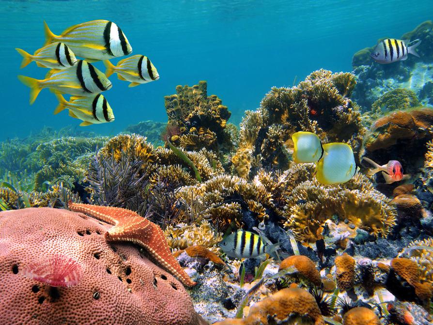 Underwater tauchen meer karibik kuba ägypten