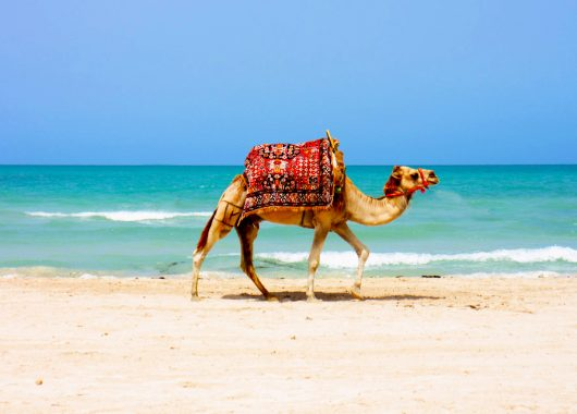 1 Woche Djerba im November: 4* Hotel inkl. Halbpension, Flug und Transfer ab 281€