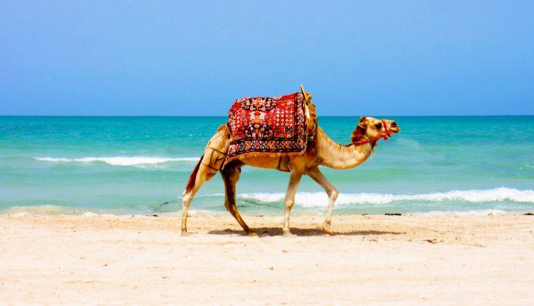11 Tage Tunesien im 4-Sterne Hotel ALL INCLUSIVE mit Flügen, Transfer und Zug zum Flug für 341€ pro Person