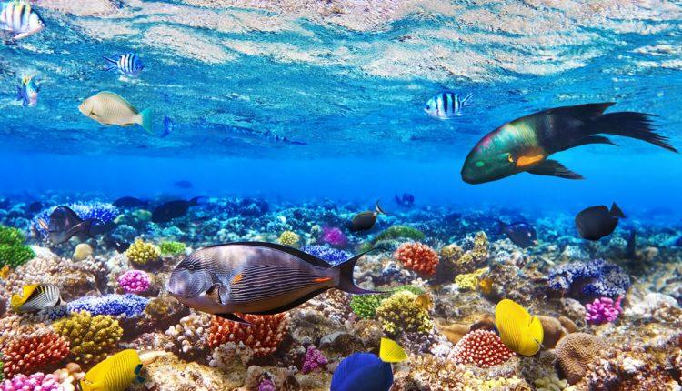Pauschalreise nach Ägypten: 1 Woche El Gouna im 4* Hotel ab 326 Euro inkl. Flug, Transfers & Halbpension
