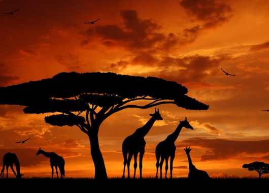 Kenia: 9 Tage im sehr guten 3*S Hotel inkl. Flug, Transfer und All Inclusive Verpflegung für 1.068€