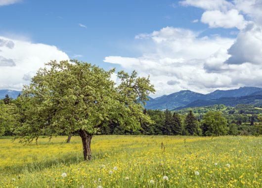 Familienurlaub: 4 Tage im Ferienpark & Hotel Schöneck inkl. Erlebnisbad, Frühstück uvm. für 177€ statt 315€