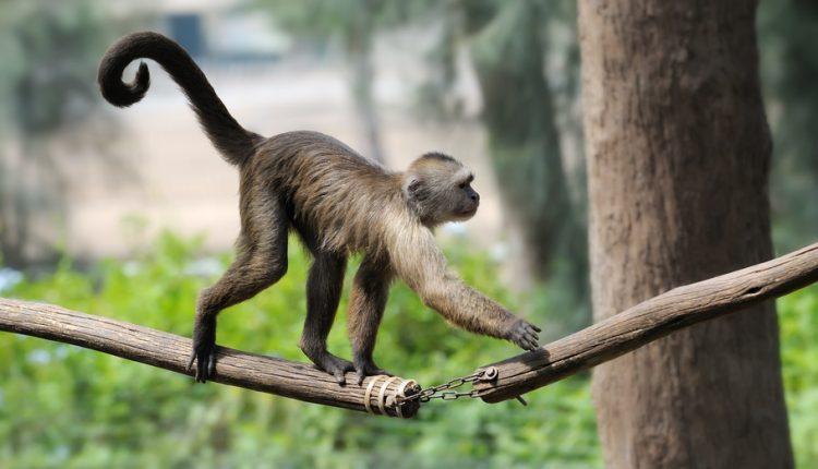 Groupon: 2 Tageskarten für Erwachsene für den Kölner Zoo für 17,50 €