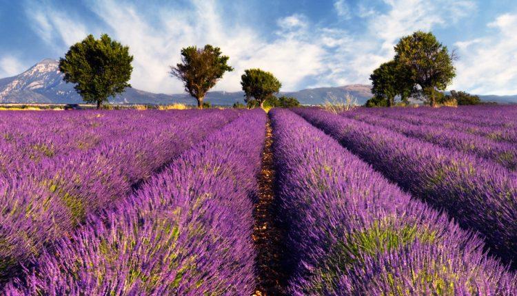 LTUR Top-Ziel International: Mit der Bahn ab 36€ nach Frankreich, z.B. Paris, Lyon, Aix en Provence, Marseille