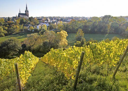 3 Tage Weinkultur im Taunus: Zu zweit im Carathotel Rheingau mit Schwimmbad für 99 Euro