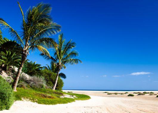 Eine Woche Fuerteventura im 3* Hotel mit All In, Flug, Rail&Fly u. Transfer ab 459€