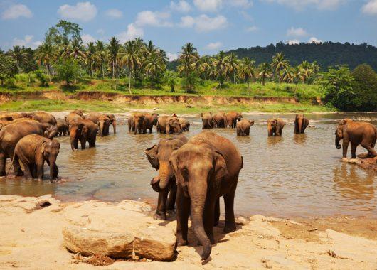 9 Tage Sri Lanka: 5*Hotel mit Flügen, Frühstück und Transfers ab 699€