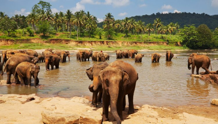 Sri Lanka-Rundreise: 12-tägige Flugreise inklusive Rail & Fly und Halbpension ab 999€ pro Person