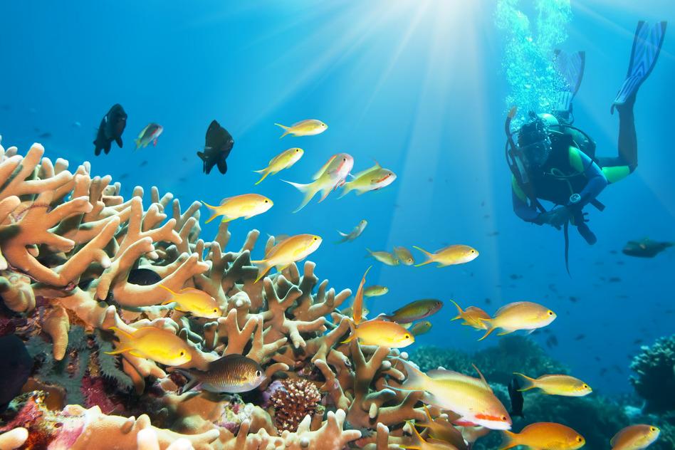 tauchen ägypten unterwasser underwater