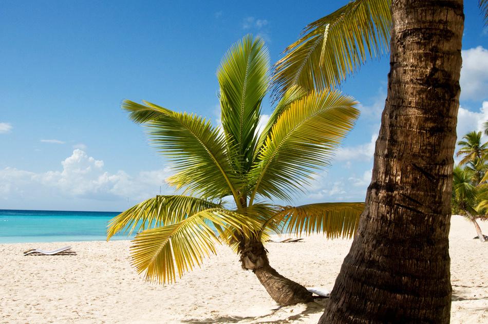 Dominikanische Republik Karibik Strand Palmen