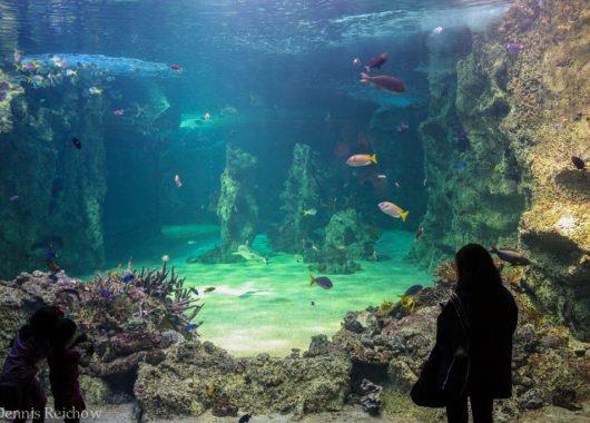Sea Life Oberhausen: Eintritt mit Übernachtung im 3,5-Sterne Hotel inkl. Frühstück für 39 Euro pro Person