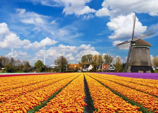 3 Tage Entspannung in Holland inkl. Frühstück, Dinner, Rundfahrt und mehr ab 49€