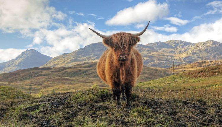 flybe Gutschein: 20% auf alle Flüge, günstig nach Schottland, England und Irland