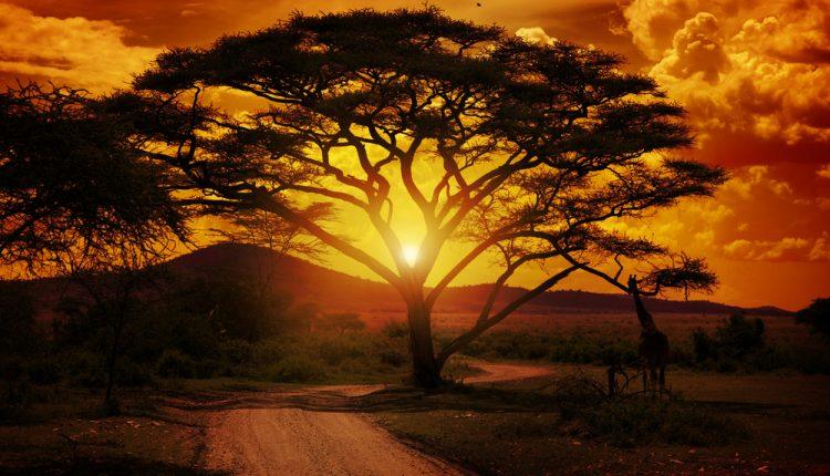 Afrika: 9 Tage Gambia im sehr guten 4* Hotel ab 883 Euro inkl. Flug, Transfers & Frühstück