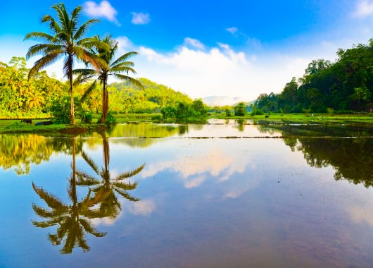2 Wochen Sri Lanka im 4* Hotel inkl. HP, Flug, Rail&Fly u. Transfer ab 877€