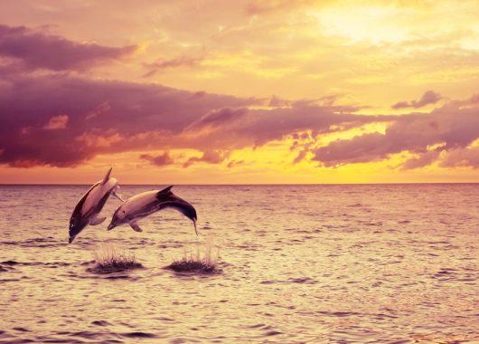 9 Tage Bahamas: 4,5* Hotel auf Paradise Island, Flug, Transfer und Rail&Fly für 1582€