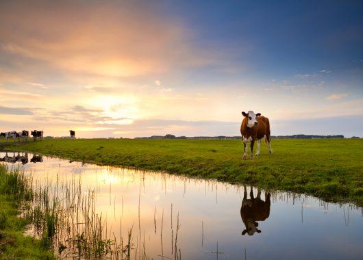 Kreuzfahrt Niederlande & Belgien – 7 Tage mit Vollpension, Bordprogramm und vielen Ausflugsoptionen für 289€