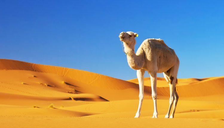 1 Woche Tunesien im 5 Sterne Hotel für nur 306€ ALL INCLUSIVE inkl. Flug, Zug zum Flug und Transfer