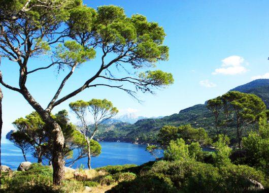 Mallorca im Mai: 1 Woche im 4*Hotel inkl. Halbpension und Flug für 322€