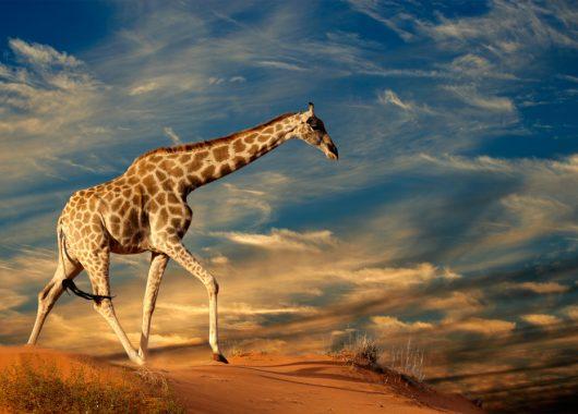 Nur noch heute!: Tagesticket für den Zoo / Safaripark Stukenbrock für nur 13,90€ statt 28,00€ bei Groupon