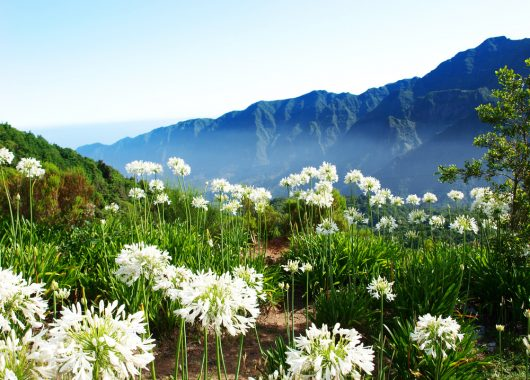 1 Woche Madeira im 4* Hotel inkl. Frühstück, Flug und Transfer ab 480€
