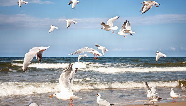 3 Tage auf der Ostseeinsel Poel: 4* Hotel inklusive Frühstück ab 74€ pro Person