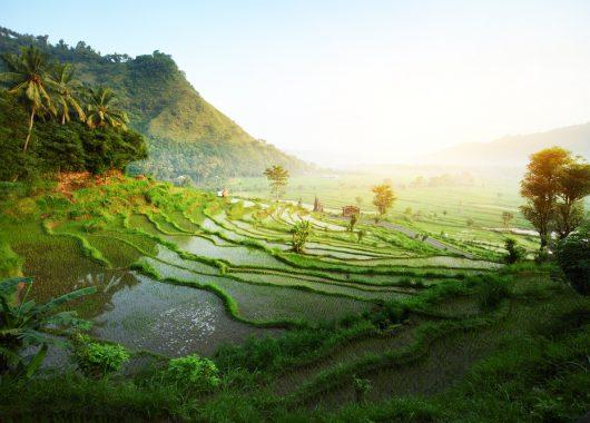 15 Tage Bali im 4* Deluxe Bungalow inkl. Frühstück, Flug und Transfer ab 1225€