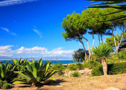 Mallorca: 2 Wochen im sehr guten Apartment inkl. Flug, Rail & Fly, Transfers und Halbpension ab 525€