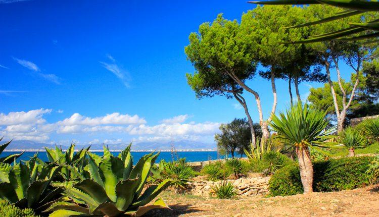 Mallorca: 7 Tage im sehr guten 3* Hotel inkl. Flug, Transfer, Halbpension und Meerblick ab 396€