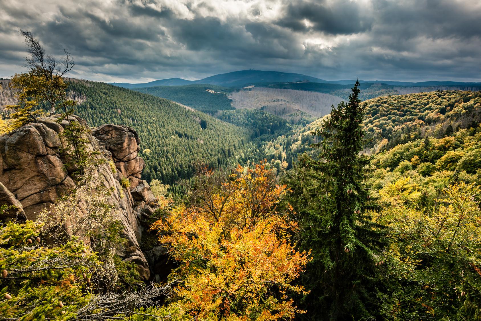 Harz Brocken Wald
