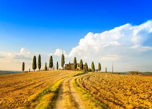 Toskana: 5,6 oder 8 Tage im 4*Hotel inkl. Halbpension und Weinprobe ab 199€